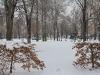 colmar-snow-filled-park