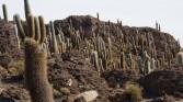 30. Cacti forrest