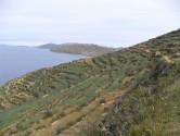 Isle de Sol - Agriculture