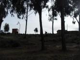 Isle de Sol - Eucalyptus trees