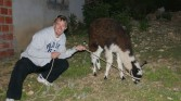 Isle de Sol - Pete and his Lama