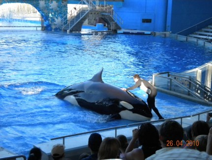 The Orca show, called Believe, at Shamu Stadium was absolutely awesome.