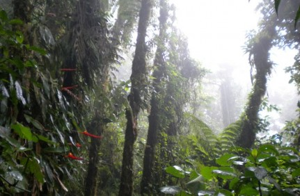 Moneteverde Cloud Forest, we saw why it got its name....