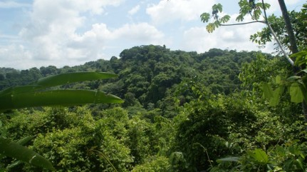 A beautiful national park is only a short walk away from the beach in Manuel Antonio