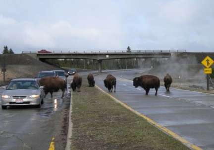 Technically the road belongs to the bison.....