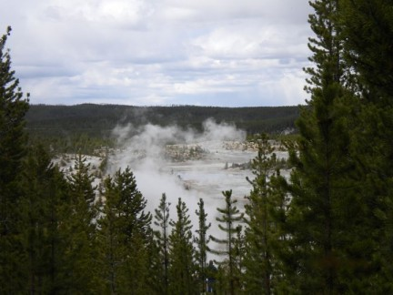 A geyser produces steam that rises above the trees. There were geysers everywhere.