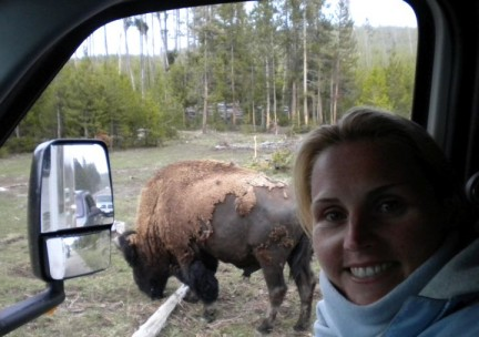 Lis and her bison friend. Neither were bothered by one another's presence.