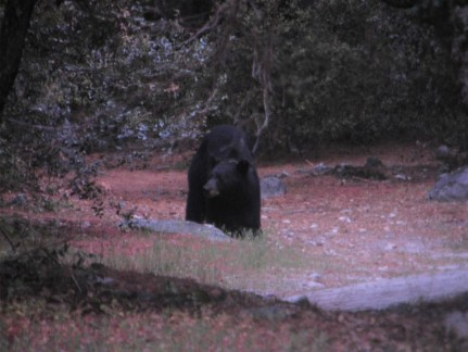 This was the bear we encountered when we turned the corner!!! Awesome...
