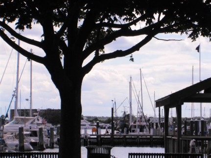 Newport Yacht Marina