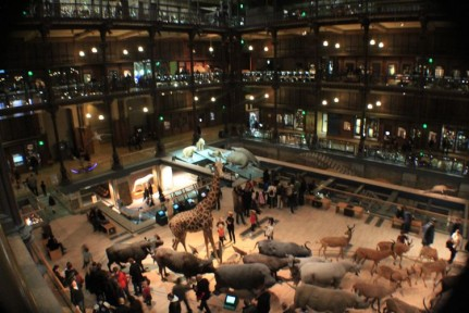 Inside the fantastic Museum overlooking the animals of the savannahs of Africa