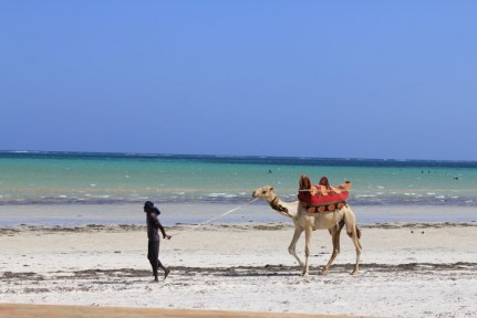 Camel rides are on offer on the beaches in Mombasa