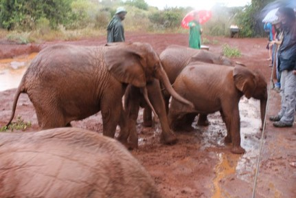 The baby elephants were so cute at the orphanage