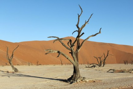 Deadvlei is a dried up river. These dead trees are around 900 years old and haven't decomposed because it is too dry to do so...