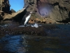galapagos-penguin