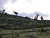 Landscape around Pacaya Volcano