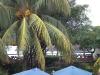 Palm trees in Hotel Roca Sunzal, El Salvador