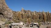 12. Cactus