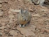 94. Rabbit
