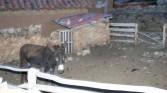 Isle de Sol - Donkey in paddock