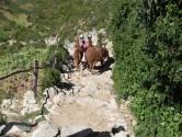 Isle de Sol - Lamas at work