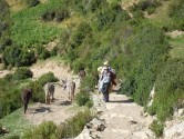 Isle de Sol - Liss and Livestock
